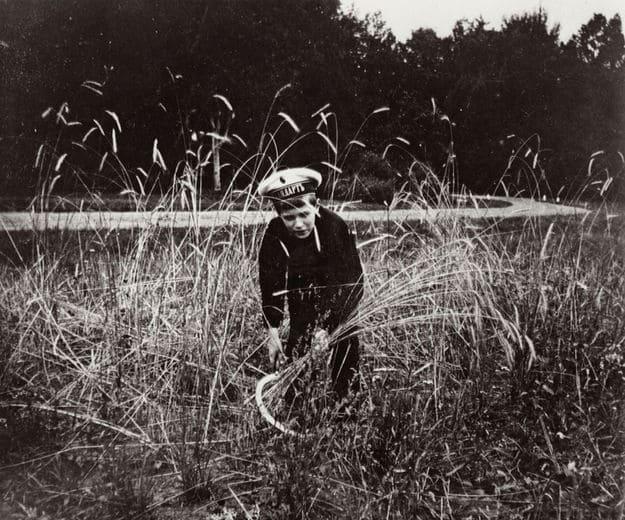 Цесаревич Алексей собирает урожай ржи на своём поле в Царском Селе